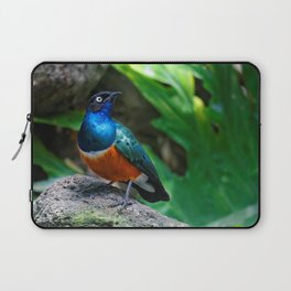 A Stunning African Superb Starling Laptop Sleeve