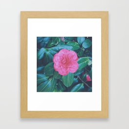 Camellia the Lonesome Framed Art Print