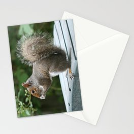 Visiting Squirrel Luncheon (Photography: Critters and Creatures) Stationery Cards