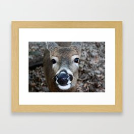 Woodland Companion Framed Art Print