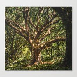 Tree Climbing Canvas Print