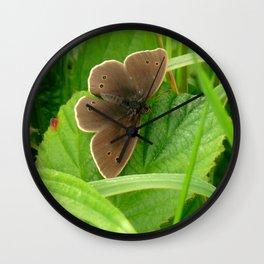 FALSE RINGLET BUTTERFLY Wall Clock