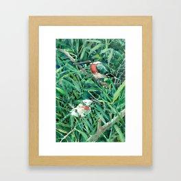 Green Kingfishers and Green Grass Framed Art Print
