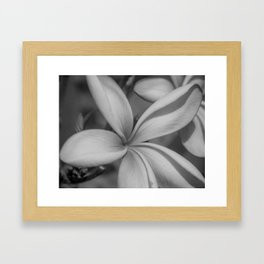 Black and White Frangipani Framed Art Print
