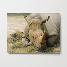 Sleeping Rhino Metal Print