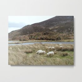 Irish Countryside Metal Print