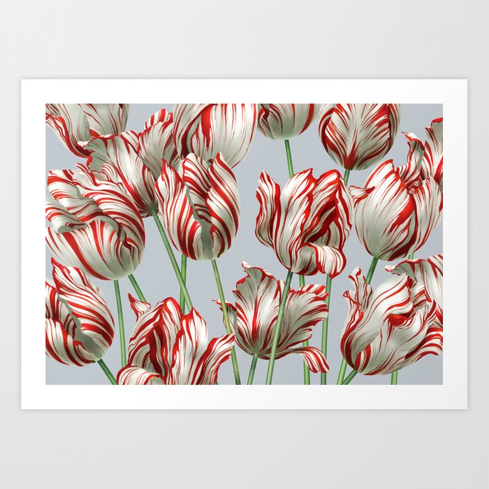 Semper Augustus Tulips Kunstdrucke
