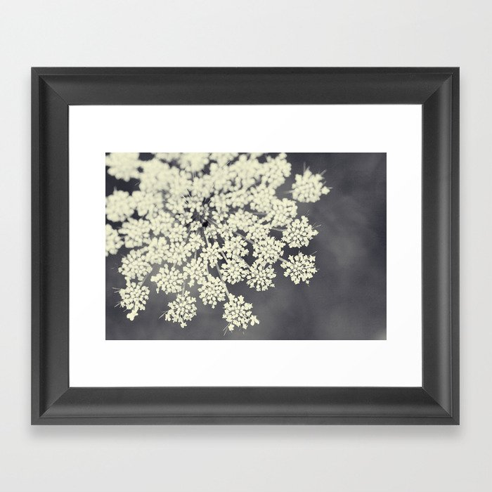 Black and White Queen Annes Lace Framed Art Print by ...