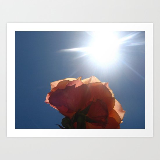 Translucent Rose II Art Print