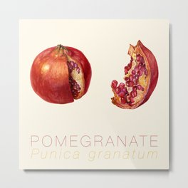 Pomegranate, Punica granatum Metal Print