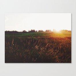 Sunset Cornfield Canvas Print