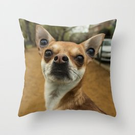 Four eyed Chihuahua?! Throw Pillow