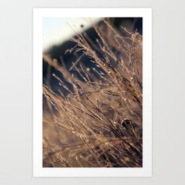 Frost Prisim Art Print