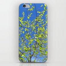 spring tree iPhone & iPod Skin