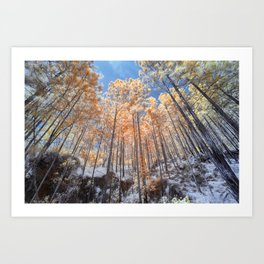Looking up looking at the trees Art Print