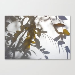 Veiled Nature 5 Canvas Print