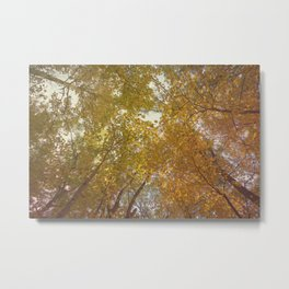 Falling for Fall Metal Print