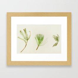 Conifer Study Framed Art Print