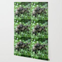 Dachshund Doxie Wallpaper