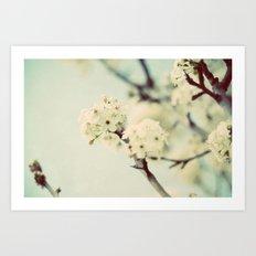 white blooms Art Print