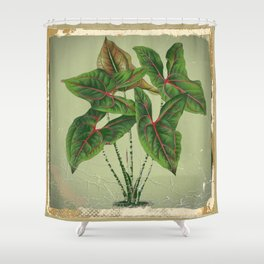 Grungy antique style  Botanical Art Shower Curtain