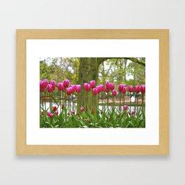 Long Stem Pink Tulips Framed Art Print