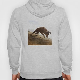 Dogs with the game face on .45 Hoody