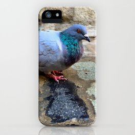 Pigeon in Girona, Spain iPhone Case