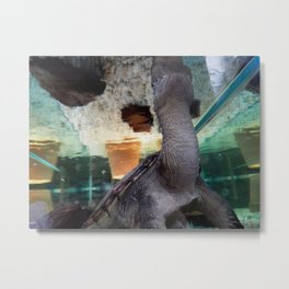 Snapping turtle's world Metal Print