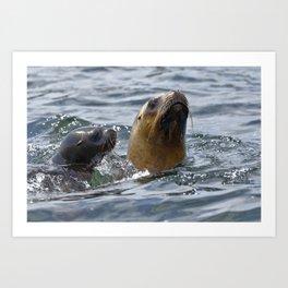 sea lion (Otaria flavescens) Art Print