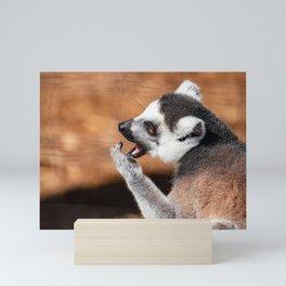 Ring tail lemur eating Mini Art Print