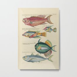 Vintage Fish Illustration V Metal Print