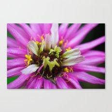 Macro Violet Flower Canvas Print