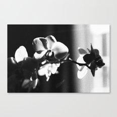 black orchid Canvas Print