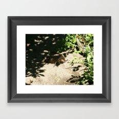 Mother Bird - Sandpiper Framed Art Print