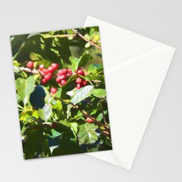 Coffee beans on vine in Panama Stationery Cards