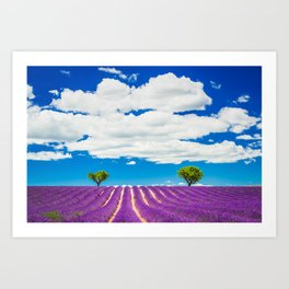 Provence lavender field in Valensole, France. Art Print