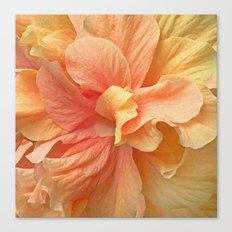 Tropical Peach Hibiscus Canvas Print