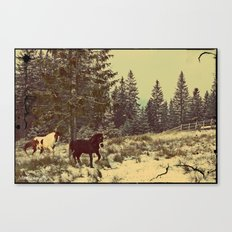 In a search of freedom Canvas Print