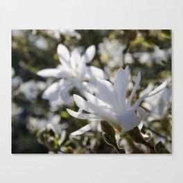 Luminous White Canvas Print