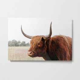 Scottish Highlander cow in national park | Cattle in Nature | Veluwe park, the Netherlands | Travel photography Metal Print