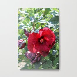 Luna Red Hibiscus Metal Print