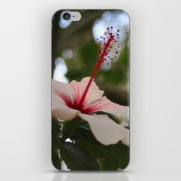 Hibiscus flower on its tree iPhone Skin