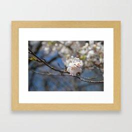 Ivory No. 02 Framed Art Print