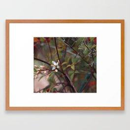 Christmas Flower Framed Art Print