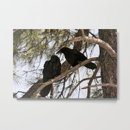 Two Crows in a Tree Metal Print