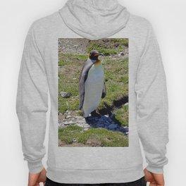 King Penguin Hoody