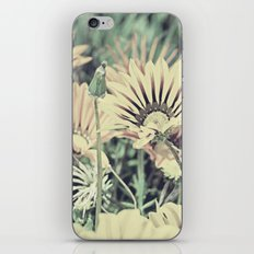 Desert Daisies - Daisy Project in memory of Mackenzie iPhone & iPod Skin