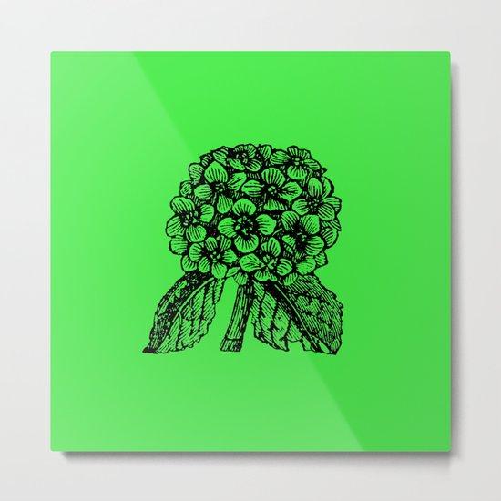 Green Hydrangea Metal Print