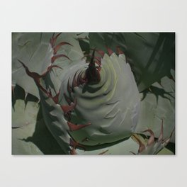 Silvery Green Agave Bud Imprints  Canvas Print